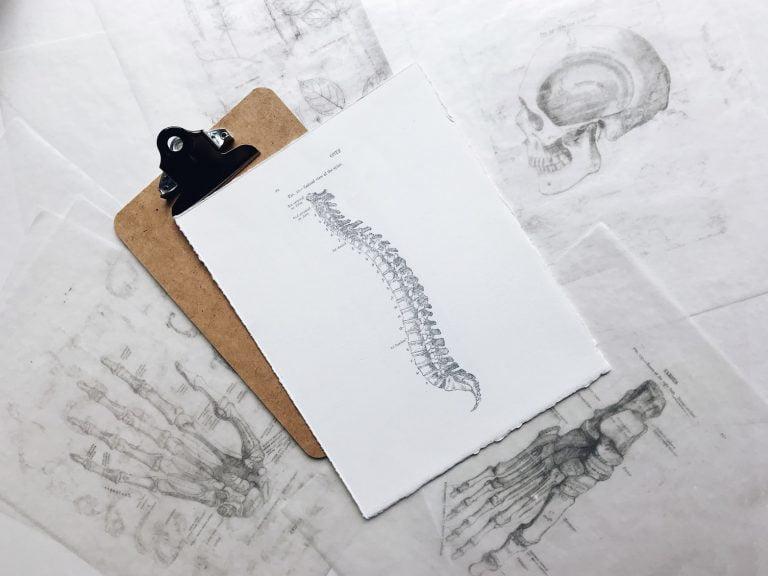 selkäranka piirros nivelet